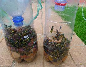 Сетка для защиты винограда от ос методы борьбы с насекомыми