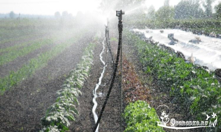 Brancher l'arroseuse au baril de pluie