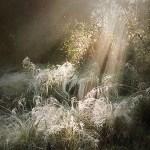 trawy ozdobne mgiełki