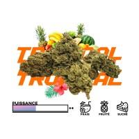 tropical stats