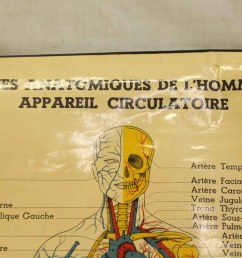 french double sided human skeleton poster [ 1200 x 705 Pixel ]