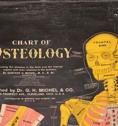 chart of osteology [ 1200 x 924 Pixel ]