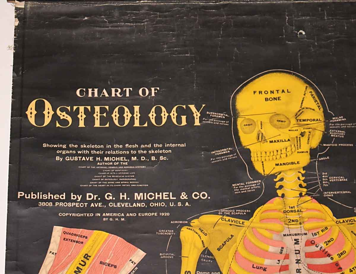 hight resolution of chart of osteology