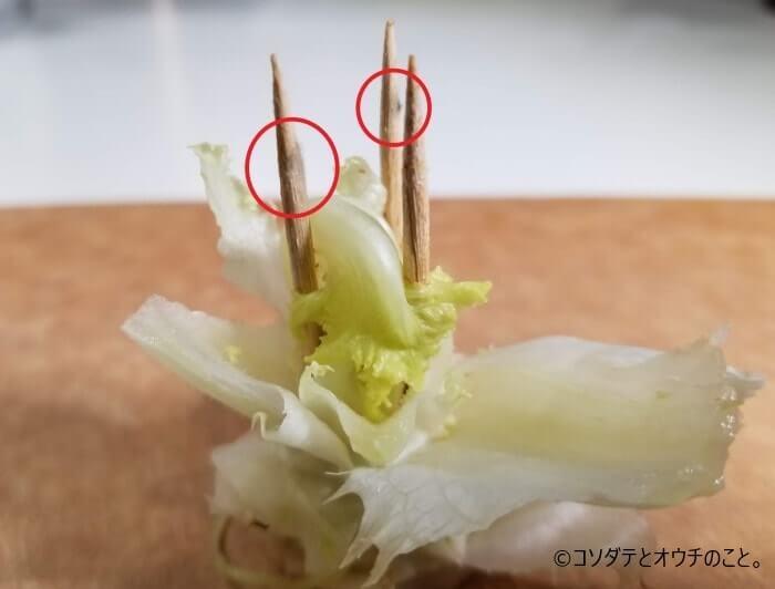 レタスに刺さったつまようじに生えたカビ(2)