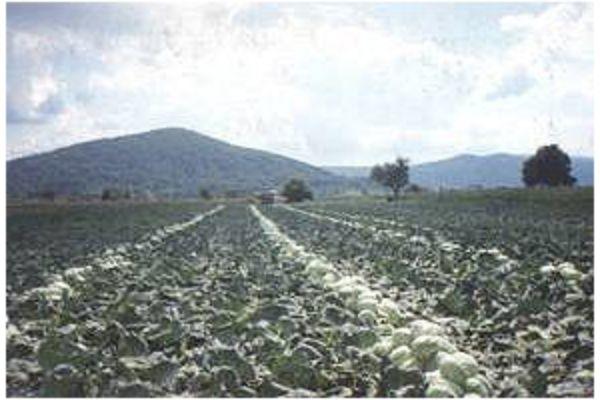 Ogulin.eu Dodjela potpora za poljoprivrednike na području Ogulina