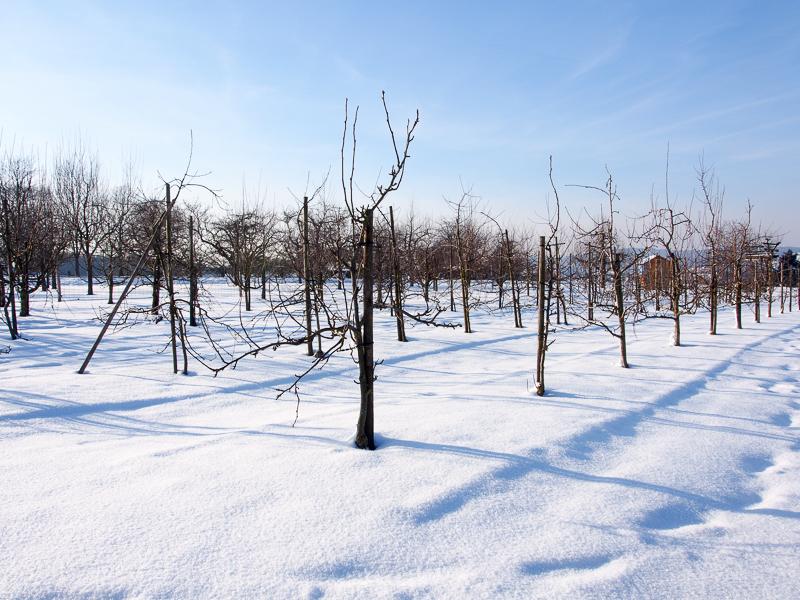 Obstlehrgarten OGV Bünzwangen Winter