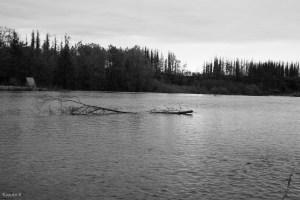 写真を撮りに帯広市の拓成湖へ行ってきた