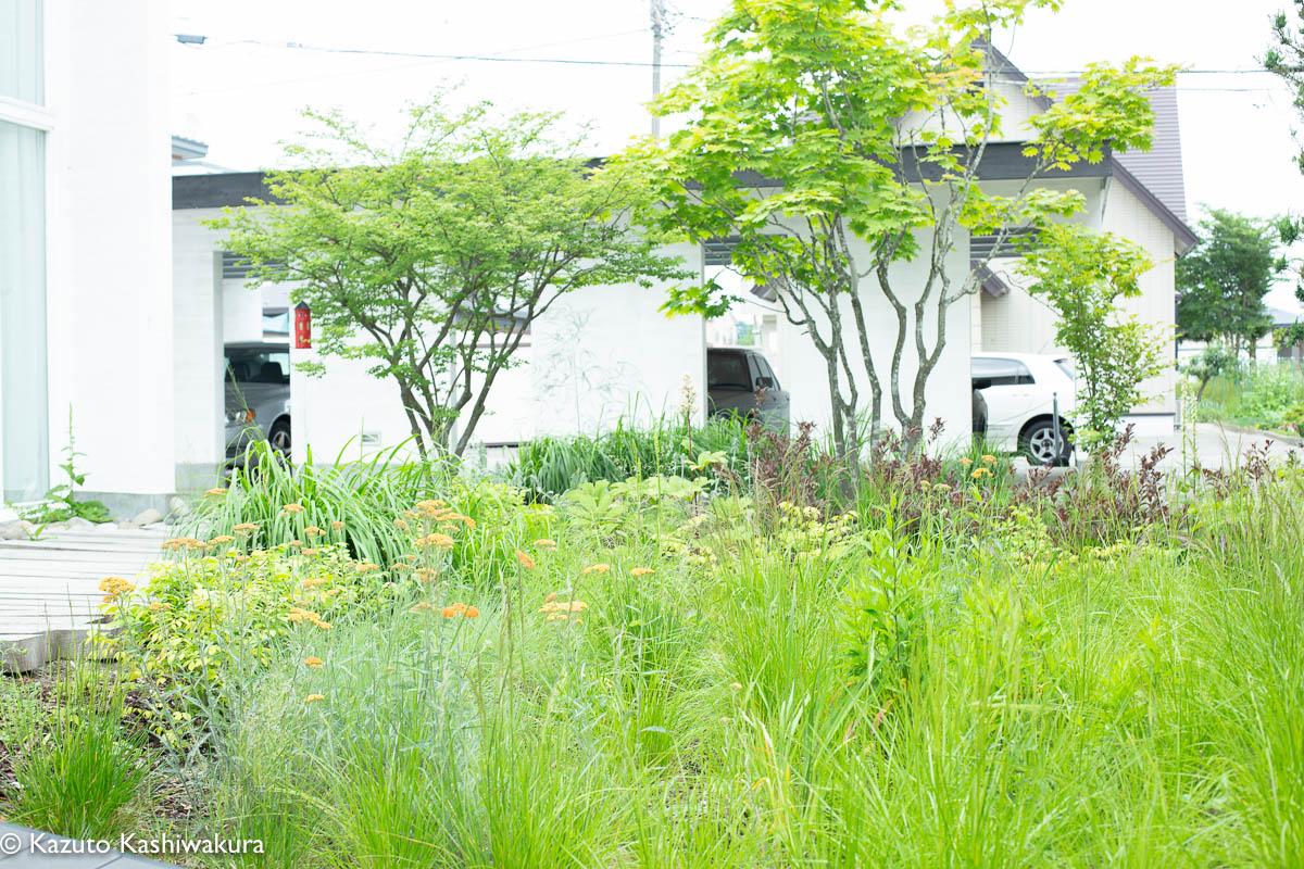 虫のつかないお庭