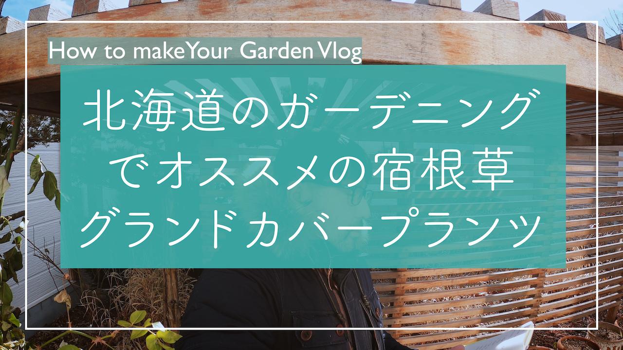 【YouTube】北海道のガーデニングでおすすめのグランドカバープランツ