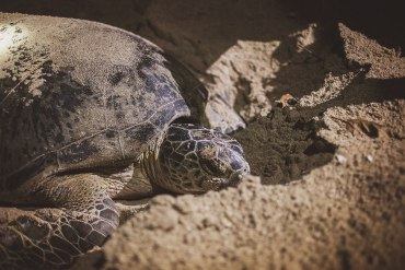 Min guide till Selingan Island (Turtle Island Marine Park)