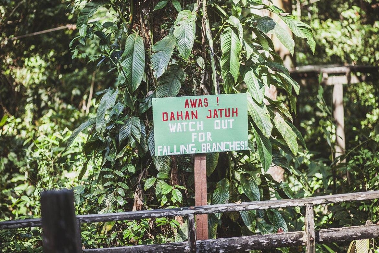 Sepilok Orangutan Rehabilitation Centre, Sabah Borneo
