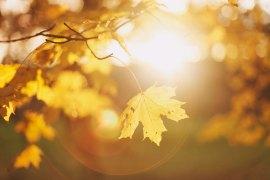 Lär dig att ta bättre resebilder: Det magiska ljuset