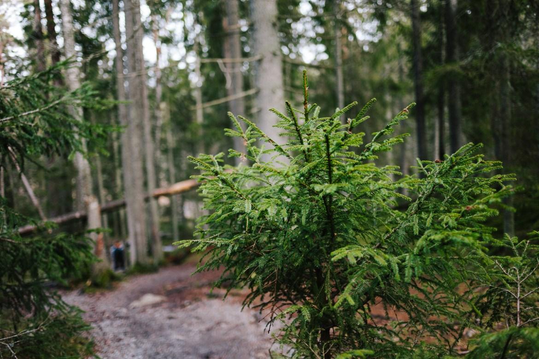 tyresta-nationalpark-stockholm-56