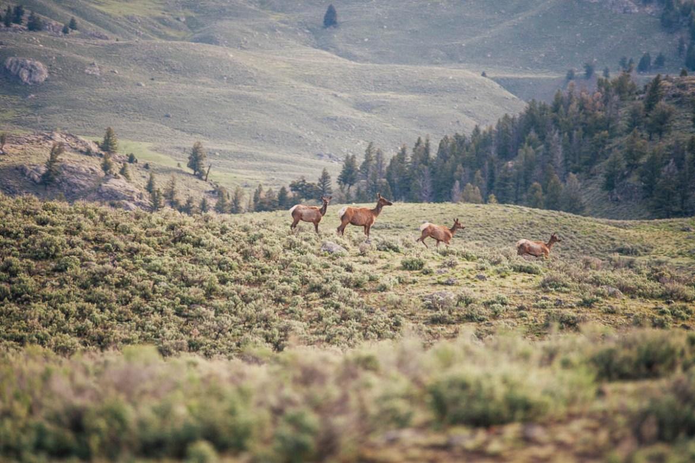 yellowstone-nationalpark-2