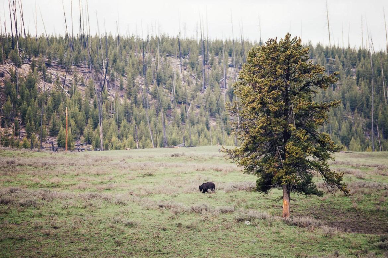 yellowstone-nationalpark-24