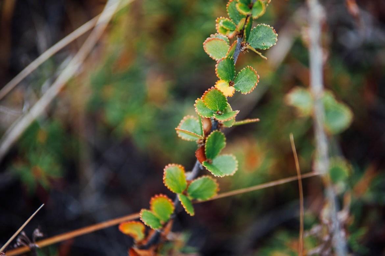 greenland (60)