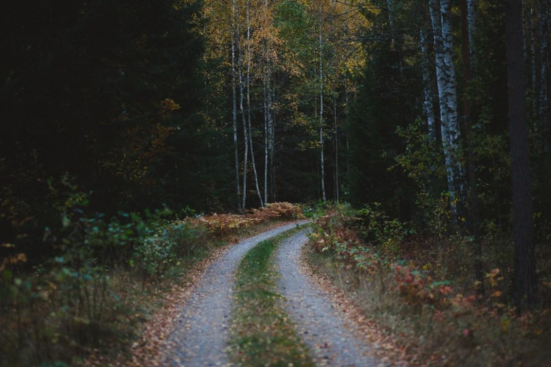 herbie-i-skogen-20