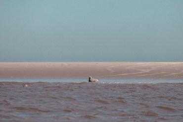 Vadehavet - en naturupplevelse i världsklass