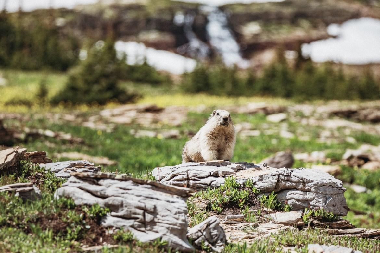 Hidden Lake i Glacier National Park