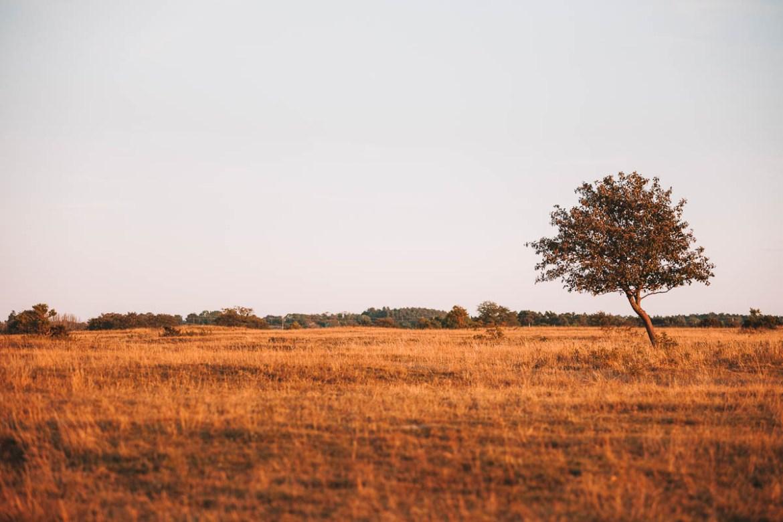 Södra Ölands odlingslandskap | UNESCO Världsarv i Sverige