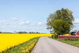 Tips på härliga platser för sommarens cykelutflykter