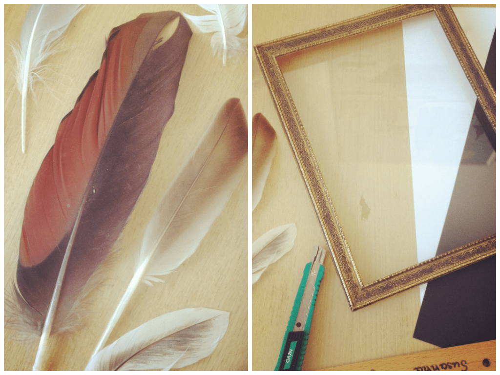 DIY  Framed Feathers  oh formidable