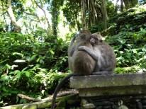 Sacred Monkey Forest - die Affen sind los