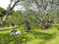 Morgen-Spaziergang durch den Botanic Garden