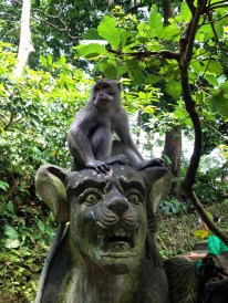 Sacret Monkey Forest