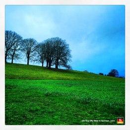 portland-oregon-meadow-field-green