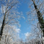 5 Things I Learned this Winter