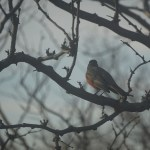 A Lesson from the Birds – Learning to Sing in the Rain