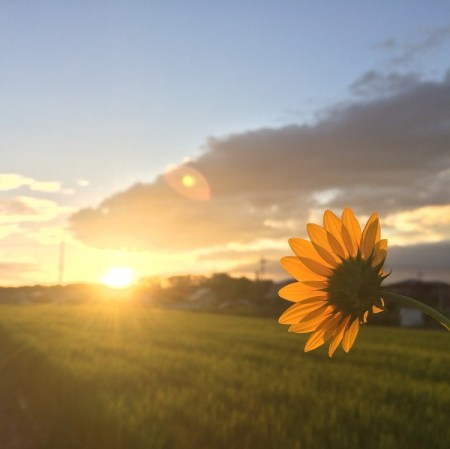 Sunflower facing the sun - hope for invisible illness