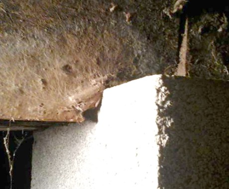 Foundation Damage and Infestations: What Can Foundation Repair Contractors Do?