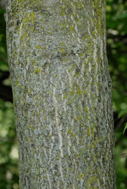Controlling NonNative Invasive Plants in Ohio Forests