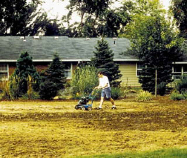 Renovating An Old Lawn In Late Summer Early Fall Photo By Jane Martin
