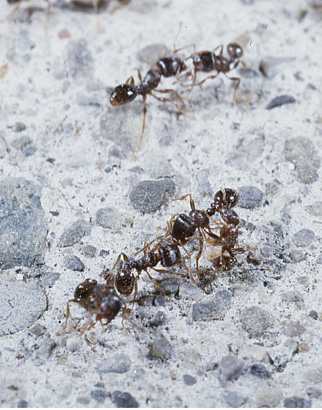 Difference Between Ants With Wings And Termites