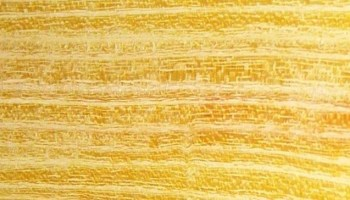 Kiln-Dried, Hardwood Slabs With Live Edges - Timber Works