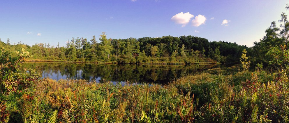 ohio woods with pond in foreground
