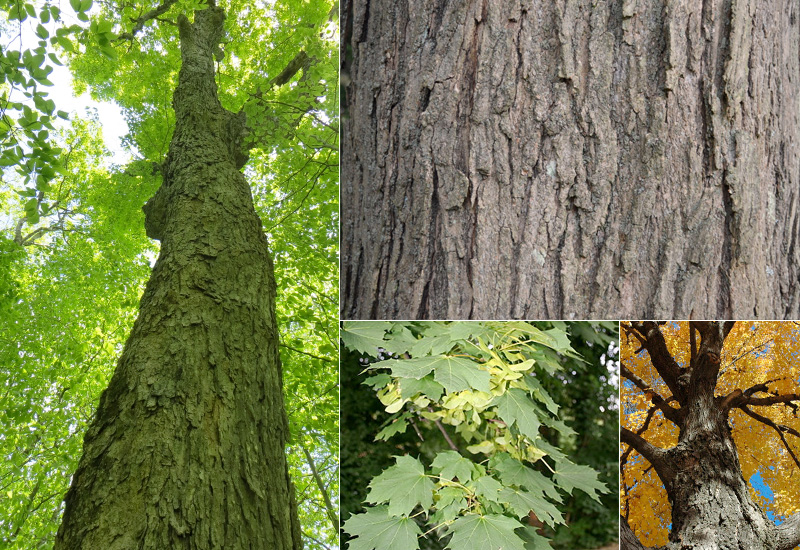 Hard Maple Pricing And Quality Timber Works