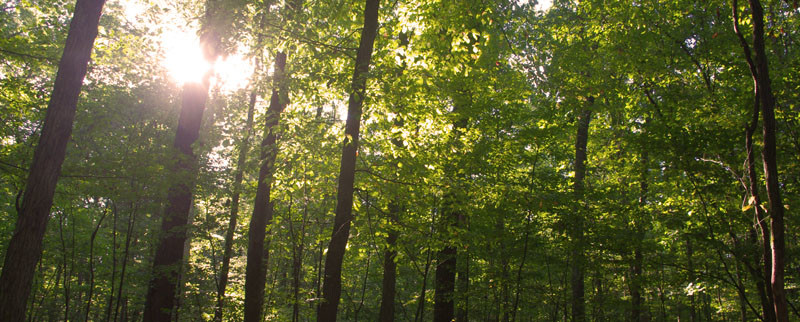 sustainable hardwood forest