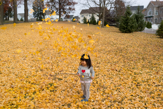 Wallpaper Leaves Falling Happy Friday Falling Into Fall Oh Joy