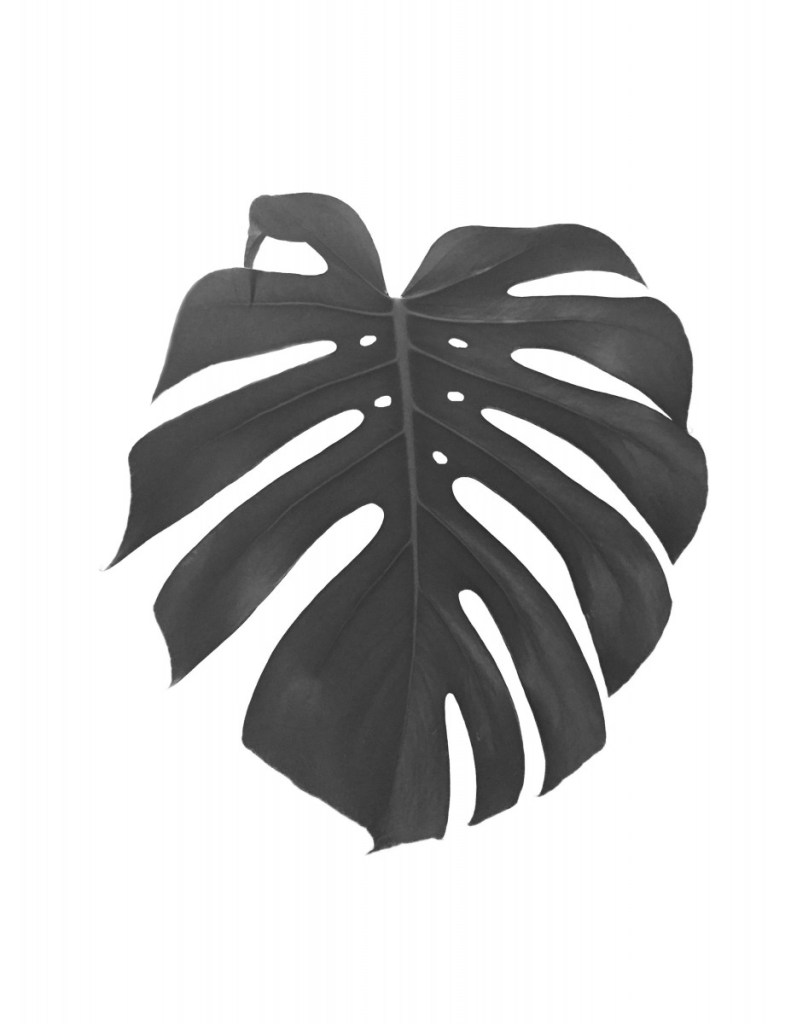 black and white tropical leaves printable wall art