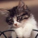 PetitChat