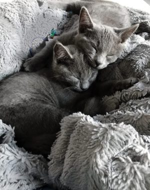 How Adding Kittens To Our Home Has Been the Perfect Pairing For Our Family   Oh Lovely Day