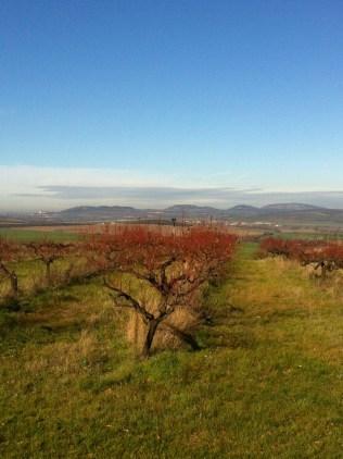 Pohled z Valtic k Mikulovu a Pálavě