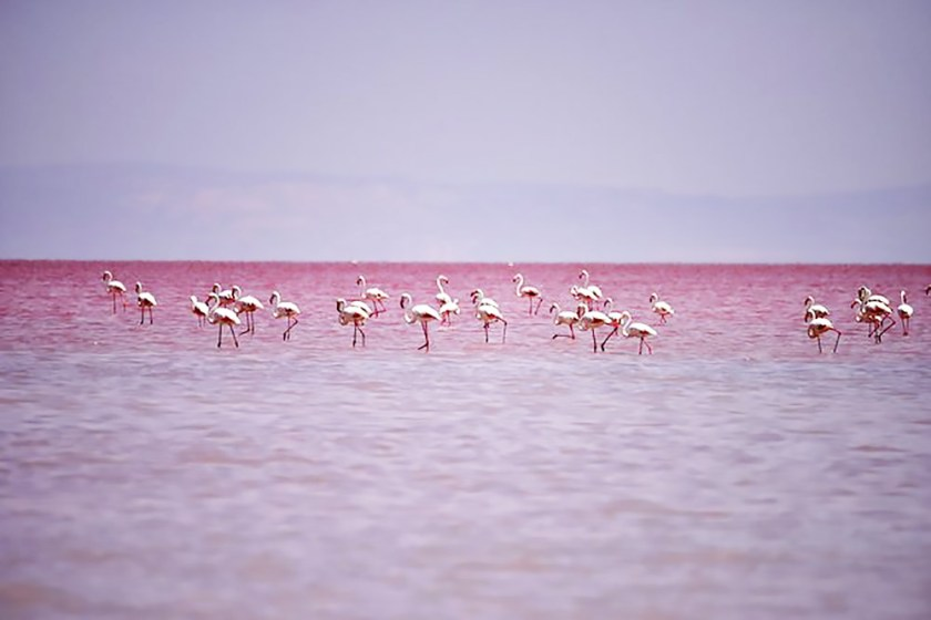 Lake Tuz Pink Lakes Dica Viagem Oh My Closet Lifestyle Monica Araujo Dream destination