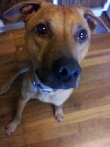 Cooper and demand barking