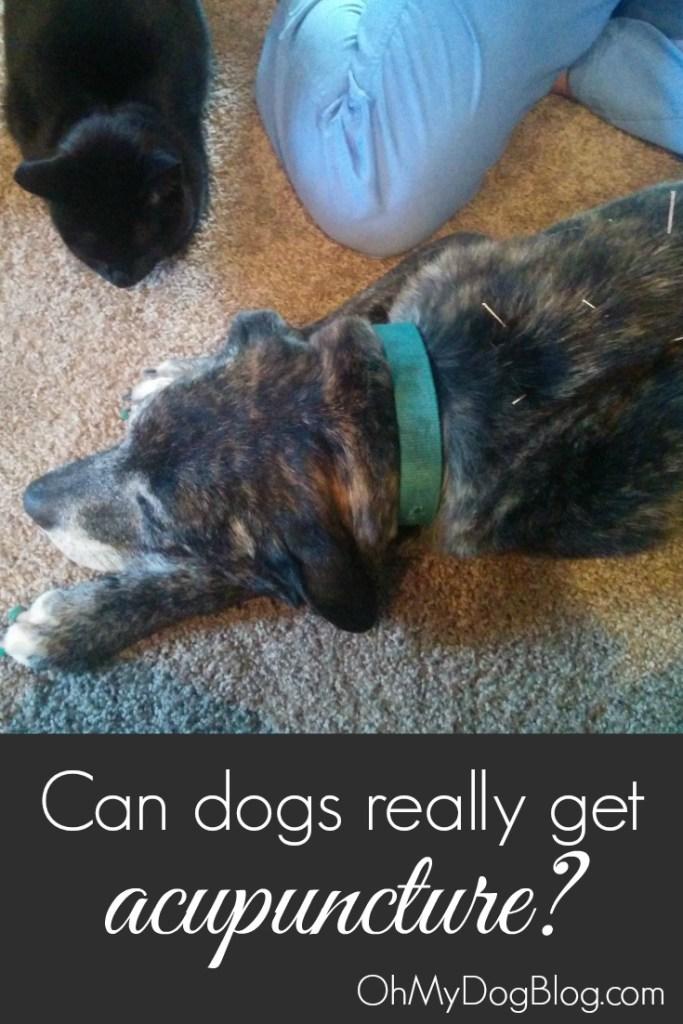 Can dogs get acupuncture?   OhMyDogBlog.com