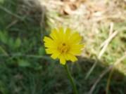 Wildflower in the yard